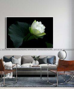tranh hoa sen 56 247x296 - Tranh Hoa Sen - OHO0215